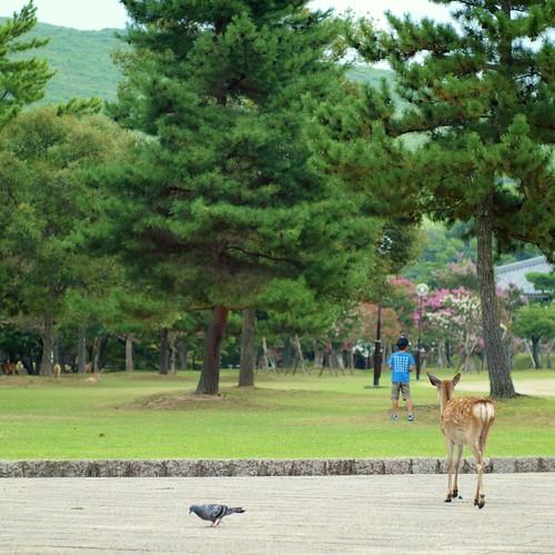 鳩と鹿と男の子