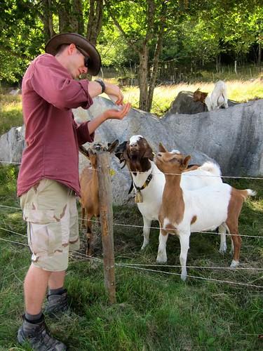 Chris Feeding Goats by Danalynn C
