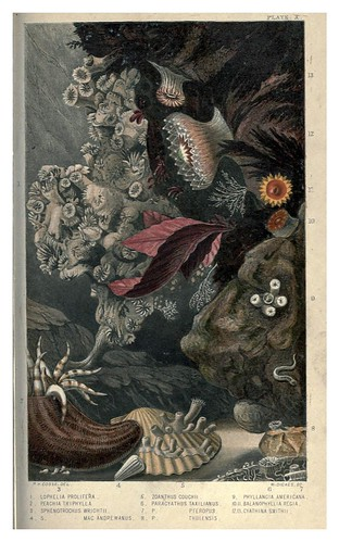 003-Actinologia Britannica… 1860- Philip Henry Gosse