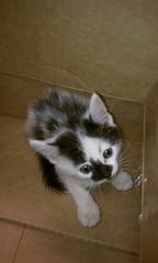 Noname cat (Now Rory)