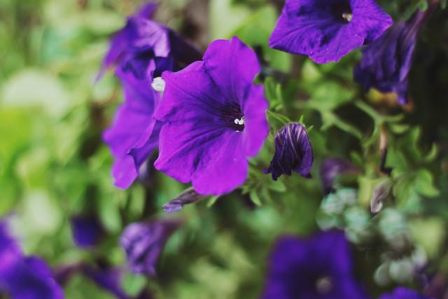 [68/365] flowers...