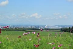 Cosmos and Sapporo Dome / コスモスと札幌ドーム (yanoks48) Tags: flower japan sapporo hokkaido 北海道 日本 花 cosmos 札幌 コスモス 羊ヶ丘 hitsujigaoka