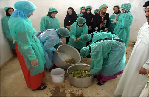 A group of Iraqi women work with vegetables during a Food Preservation Project course offered in Baghdad. Foreign Agricultural Service (FAS) agricultural advisor Thaddeus White and the Baghdad Provincial Reconstruction Team (PRT) he was assigned to worked with local non-governmental organizations to offer the course to widows and women in need. Photo credit: Thad White.