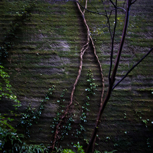 Cut Wall with Climbing Vine, Nokogiri Yama