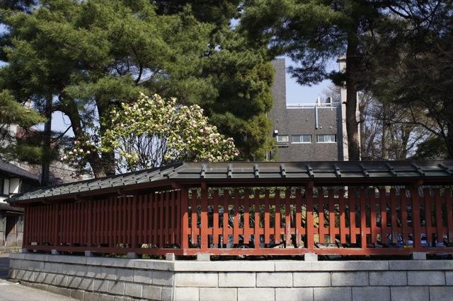 春はひと足ずつ 大手堀の桜