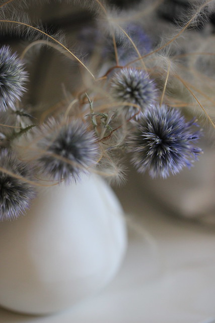 echinops ritro + stipa pennata