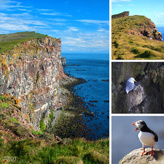 ON LATRABJARG CLIFFES (euskadi 69) Tags: cliffs puffin islande macareux northernfulmar latrabjarg fulmarboreal iceland2011
