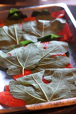 salmon and fig leaves