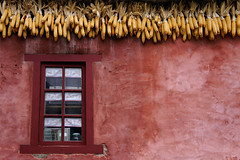 "2011_630039 - Eaves of Corn • <a style=""font-size:0.8em;"" href=""http://www.flickr.com/photos/84668659@N00/6100258525/"" target=""_blank"">View on Flickr</a>"