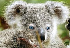 Ol' blue eyes …