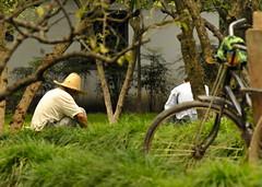 Chinese Gardeners with Bicycle in the Foreground (Jason Michael) Tags: china suzhou imaging xavier services kunshan jiangsu jasonmichael tinglingardens jasonxmichael xavierimagingservices