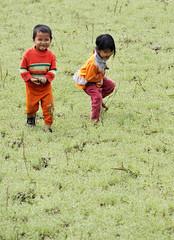 36_LAO74040060 (TC Yuen) Tags: vietnam sapa hmong terracefarming locai