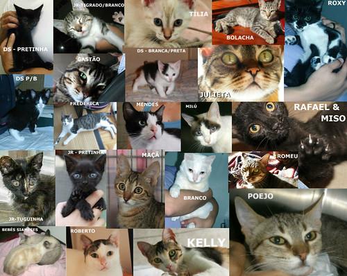 Muitos gatinhos precisam de famílias !!!