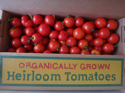 early girl dry farmed tomatoes