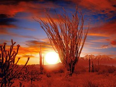 i live in the desert 2 (Mark85306) Tags: doublyniceshot doubleniceshot tripleniceshot mygearandme mygearandmepremium artistoftheyearlevel3 artistoftheyearlevel4 flickrstruereflection1 flickrstruereflection2 flickrstruereflection3 flickrstruereflection4 artistoftheyearlevel5 4timesasnice 5timesasnice