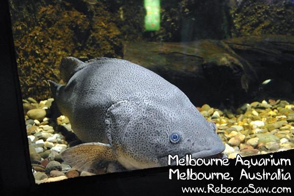 MELBOURNE AQUARIUM-29
