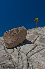 Glacial Erratic on Granodiorite with Jeffrey Pine (sierrasylvan) Tags: california mountains tree rock canon sigma yosemite yosemitenationalpark sierranevada canoneosdigitalrebelxt olmstedpoint glacialerratic jeffrypine sigma1770mmf2845dcmacrolens granodioritegraniteanddiorite