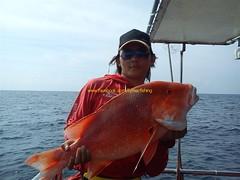 201106223 (fymac@live.com) Tags: mackerel fishing redsnapper shimano pancing angling daiwa tenggiri sarawaktourism sarawakfishing malaysiafishing borneotour malaysiaangling jiggingmaster