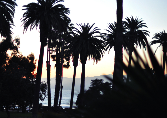 palm trees and ocean in santa monica