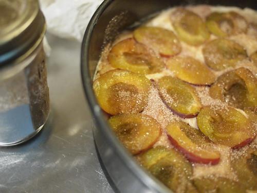 italian prune plum torte