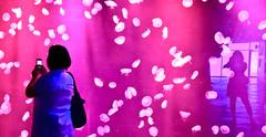 Dancing Sea Fairies (julesnene) Tags: aquarium philippines canyouseeme moonjellies moonjelly moonjellyfish aureliaaurita underwatercreatures apictureofme julesnene manilaoceanpark juliasumangil dancingseafairies