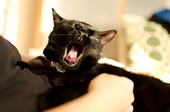 Long day (Mad_m4tty) Tags: portrait pet black cute tongue cat funny yawn tired
