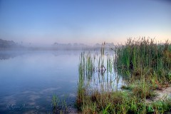 Cattailes Pond and Fog (Glenn Anderson.) Tags: mist fog sunrise a850 ponf cattailreads