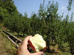 apple orchard pelion