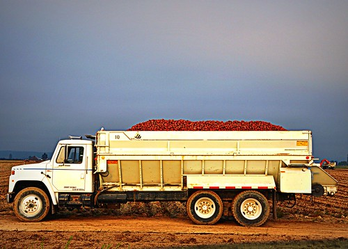 09/18/11 Potato Harvest by roswellsgirl