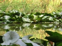 verde acquatico