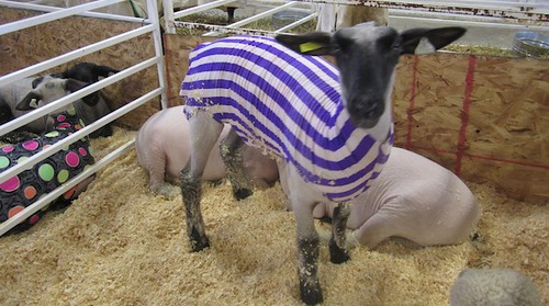 Stylin' sheeps at the Big E 2011
