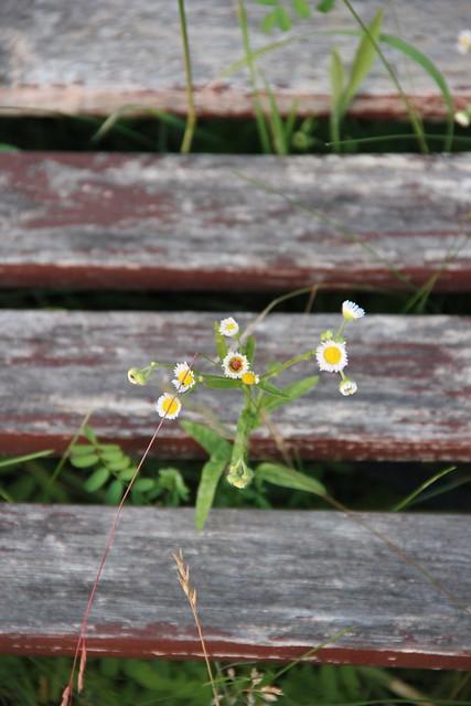 through the bench
