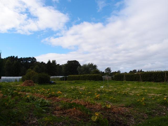 生態村中菜園一景。