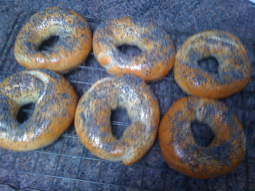 Poppyseed bagels by flimbag