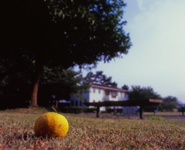芝生に落ちた果実