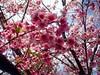 eu não conheço todas as flores... (I.souza) Tags: sonydscw90