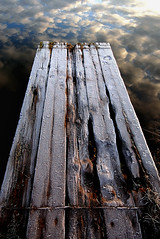 A journey of a thousand miles begins with a single step. (blinkingidiot) Tags: fish reflection hall pond bulwell mygearandme mygearandmepremium mygearandmebronze mygearandmesilver mygearandmegold flickrstruereflection1 flickrstruereflection2 flickrstruereflection3