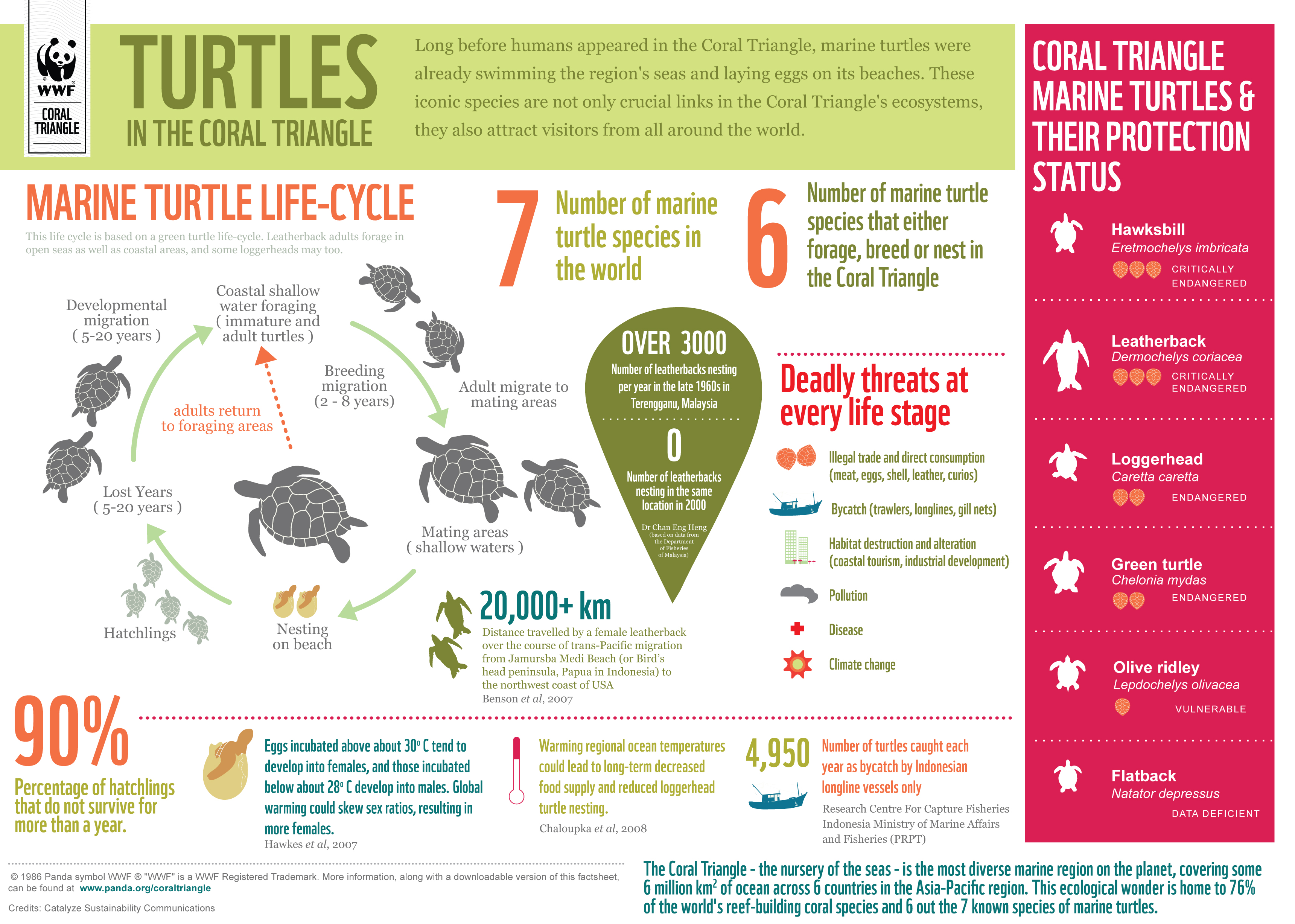 Coral Triangle Marine Turtles