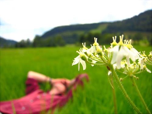 Chris Flower Field by Danalynn C