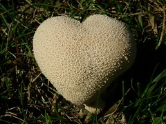 Puff Heart (Cosper Wosper) Tags: puffball heartart