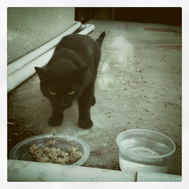 Cats love tuna... found out Achilles is a girl! #cats