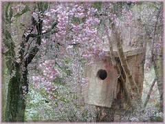 Room For Rent (McDuck17) Tags: flowers trees flower texture blossoms birdhouse cherryblossoms colorphotoaward mygearandme mygearandmepremium mygearandmebronze mygearandmesilver mygearandmegold mygearandmeplatinum mygearandmediamond blinkagain gearandmebronze