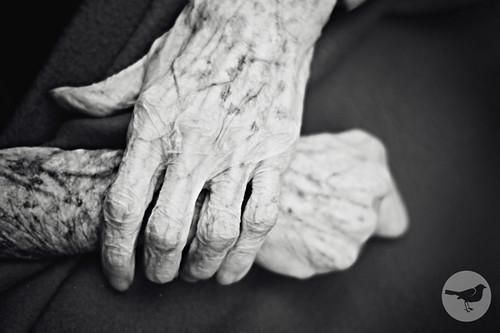 5 Generations 369