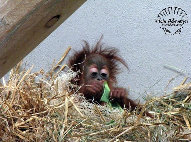 Denver Zoo: Lots of Mile High Animal Fun