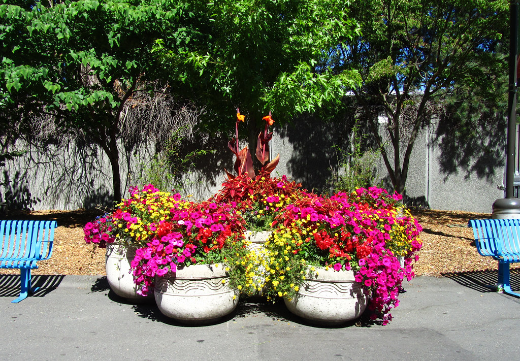 Seattle Center - Flower Pots & Blue Benches