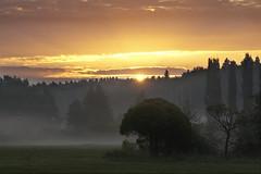 Misty Morning (ristozz) Tags: mist fog sunrise espoo finland
