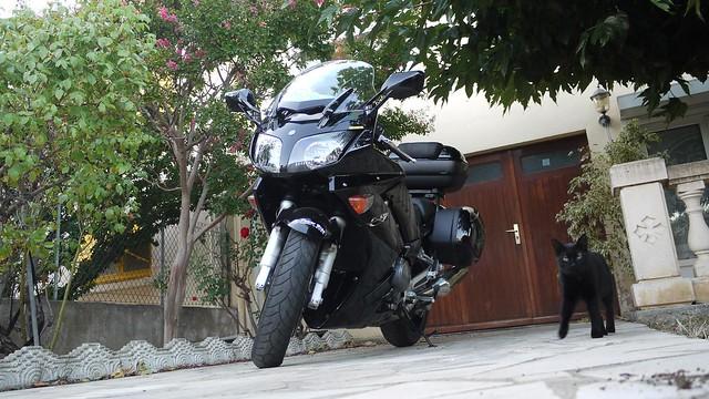 P1120111 Bis