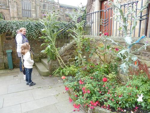 Scottish Thistles at Dunfermline