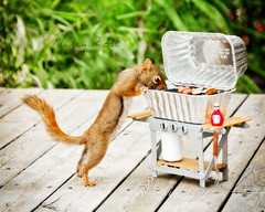 Mmmm those smell good! (Nancy Rose) Tags: squirrel peanuts barbecue hungry curious imadethis propane iamnuts wearegoodfriends tinyketchup