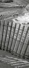 Beach Fences (Greg Adams Photography) Tags: shadow bw beach lines fence newjersey sand dusk dune angles jersey seagirt hhsc2000